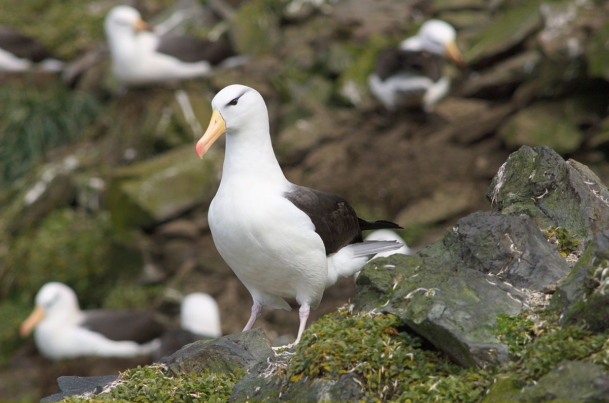 Spatial scales of marine conservation management for breeding seabirds