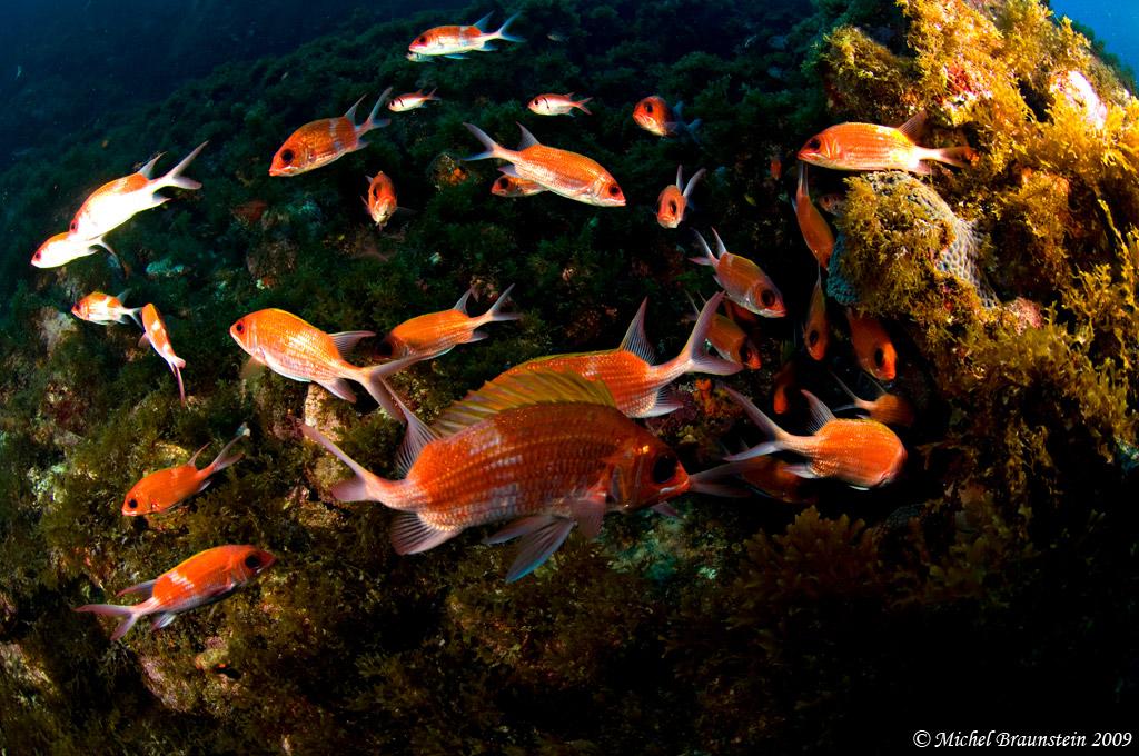 Oceano Vivo – Biodiversidade
