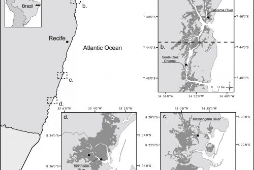 Trophic resource partitioning of two snook fish species (Centropomidae) in tropical estuaries in Brazil as evidenced by stable isotope analysis