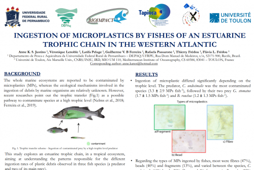 Anne Justino, PhD Student (Bioimpact-UFRPE, LMI TAPIOCA), participated in the  MICRO2020 – Fate and Impacts of Microplastics: Knowledge and Responsibilities