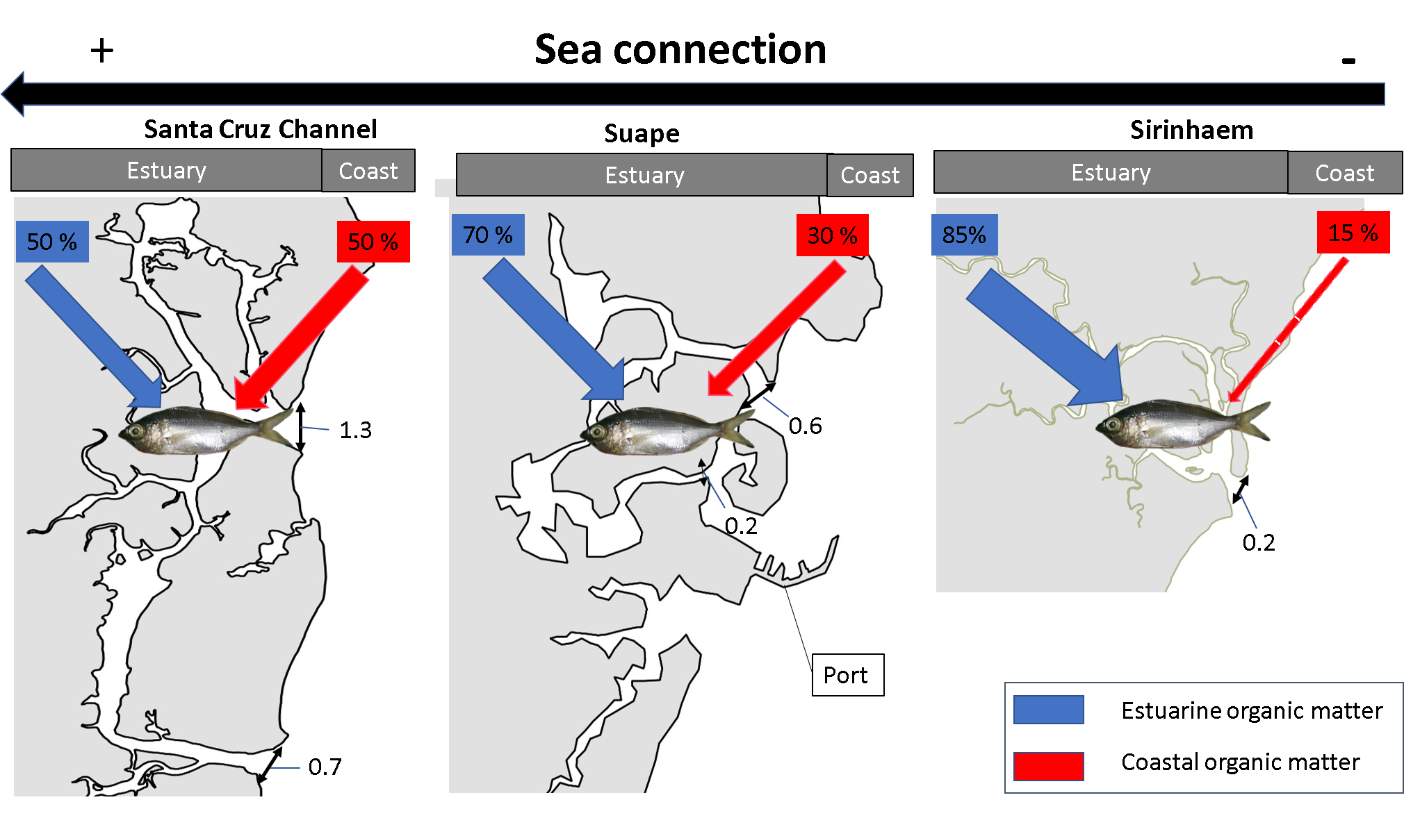 Importance of estuary morphology for ecological connectivity with their adjacent coast: A case study in Brazilian tropical estuaries