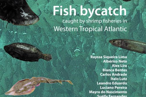 Fish bycatch caught by shrimp fisheries in Western Tropical Atlantic