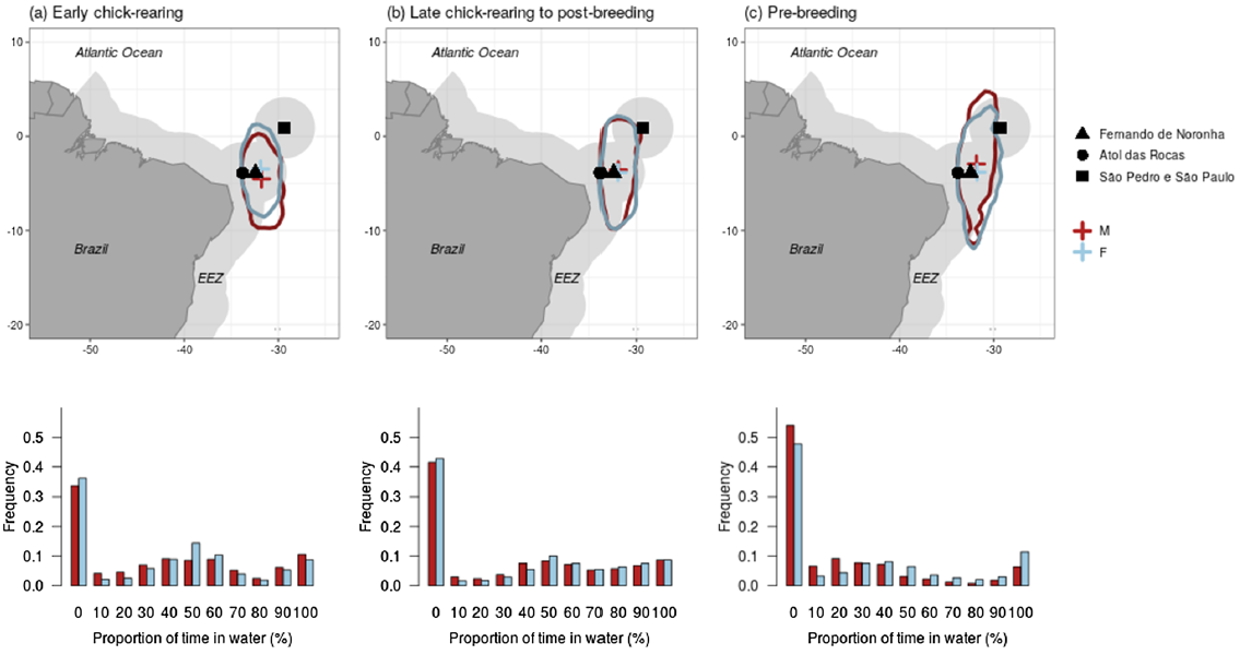 Did the animal move? A cross‑wavelet approach to geolocation data reveals year‑round whereabouts of a resident seabird