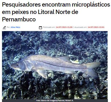 Pesquisa revela presença de microplásticos em peixes da região nordeste do Brasil