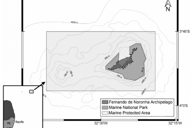 Assessing trophic interactions between pelagic predatory fish by gut content and stable isotopes analysis around Fernando de Noronha Archipelago (Brazil), Equatorial West Atlantic