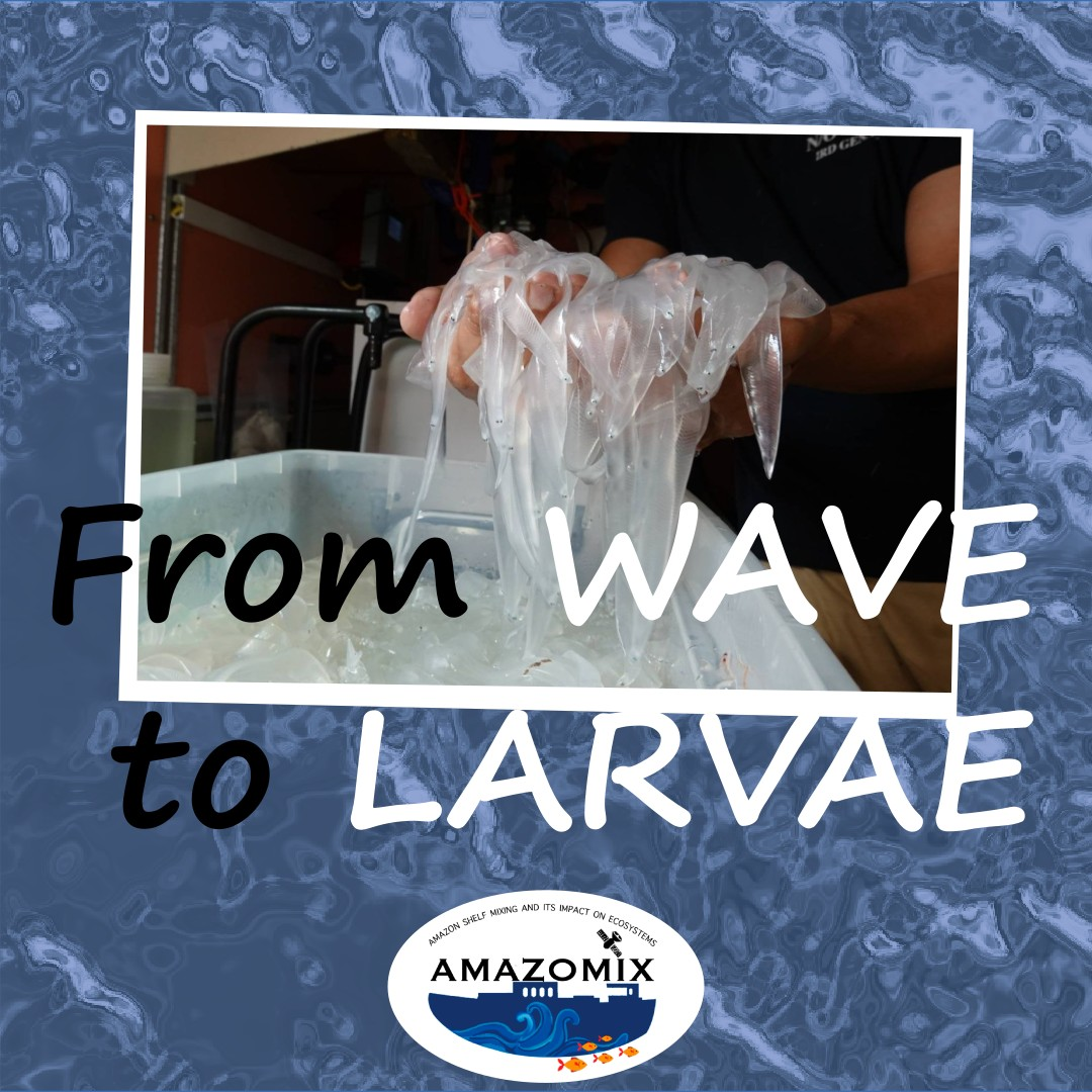 From wave to Larvae
